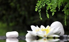 Yoga with Maz